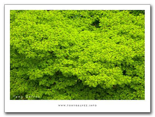 <em>greenwashing</em> en el turismo brasileño