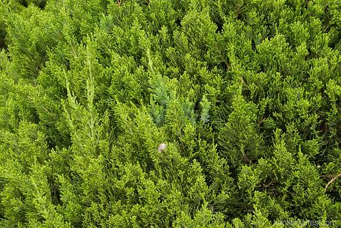 Ofuna Botannical Gardens  025