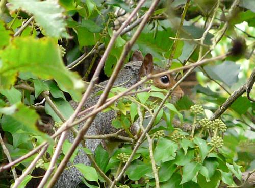 Peek a boo squirrel