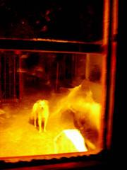 quin anda ah? (Marez Lorena) Tags: dog luz window cat ventana puerta luca movimiento perro amarillo gato mirar contraste felino canino fuego ver efecto fuerte quemado minino sobreexposicin atender arder llamar curiosear pugui hinchar marezlorena