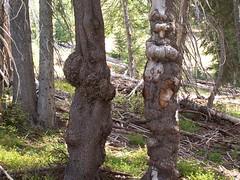 Lumpy trees