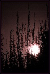 Full Pink Moon Rising