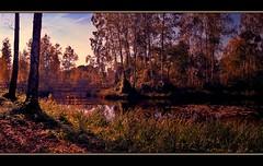 Marais de Gnonville, essai panoramique 1 (Ftal ( Eric M. )) Tags: france tree art nature colors landscape couleurs paysage arbre hdr picardie panoramique somme photofiltre easyhdr pentaxk100d uleadphotoimpact