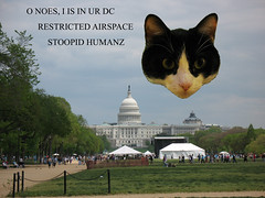 Oliver Over the Capitol (Mr. T in DC) Tags: cats pets animals architecture photoshop buildings washingtondc dc oliver tuxedocats capitol kitties dcist felines domes themall moggy capitoldome blackandwhitecats blackwhitecats lolcats pse7