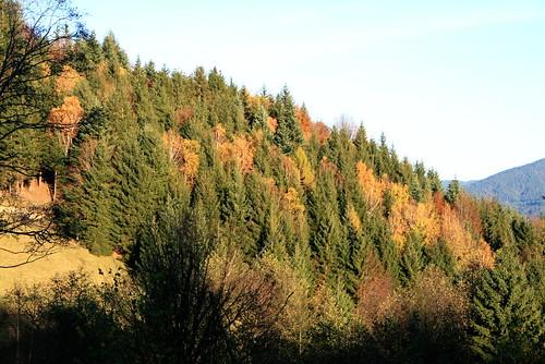Dégradé de couleurs d'automne