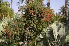 Jardin Majorelle, Marrakech 2007 (Alan Hilditch) Tags: garden jardin morocco marrakech majorelle marrakesh marruecos marokko 2007 marrocos moroc  almarib