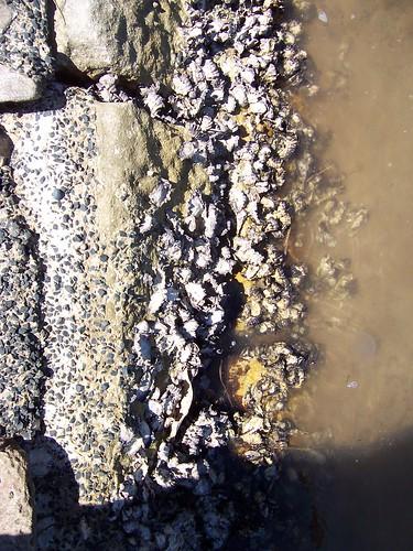 Rock Oysters Araluen Drive Hardys Bay