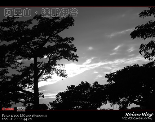你拍攝的 20081116數位攝影_阿里山之旅302.jpg。