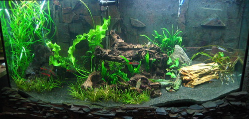 Rescape of 72g tank