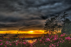 Flora vs. Sunset (Fort Photo) Tags: ocean park pink flowers sunset vacation orange beach nature clouds landscape outdoors washington flora nikon warm searchthebest state northwest nps dusk extreme vivid national pacificnorthwest wa olympic drama olympicnationalpark pnw hdr kalaloch d300 photomatix flickrdiamond theunforgettablepictures vosplusbellesphotos