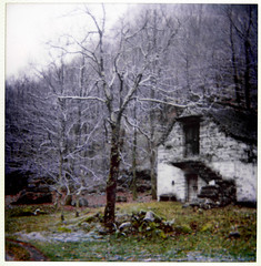 best days long gone (Funny Fish) Tags: old trees winter house snow cold tree polaroid switzerland ticino woods alone bare rundown landcamera valleverzasca rusico