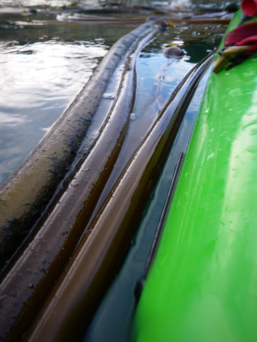 kayak and kelp