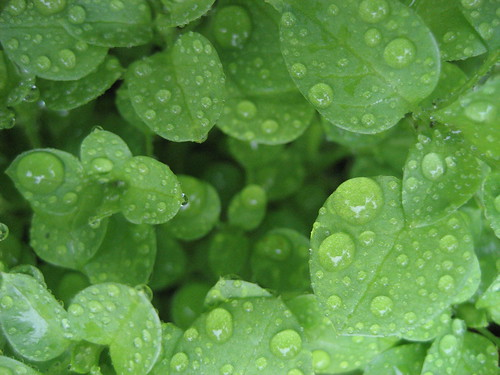 wet and green
