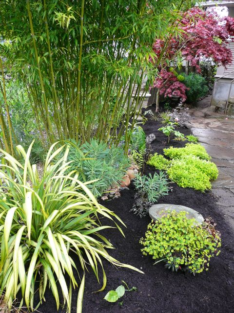 Bamboo and stuff