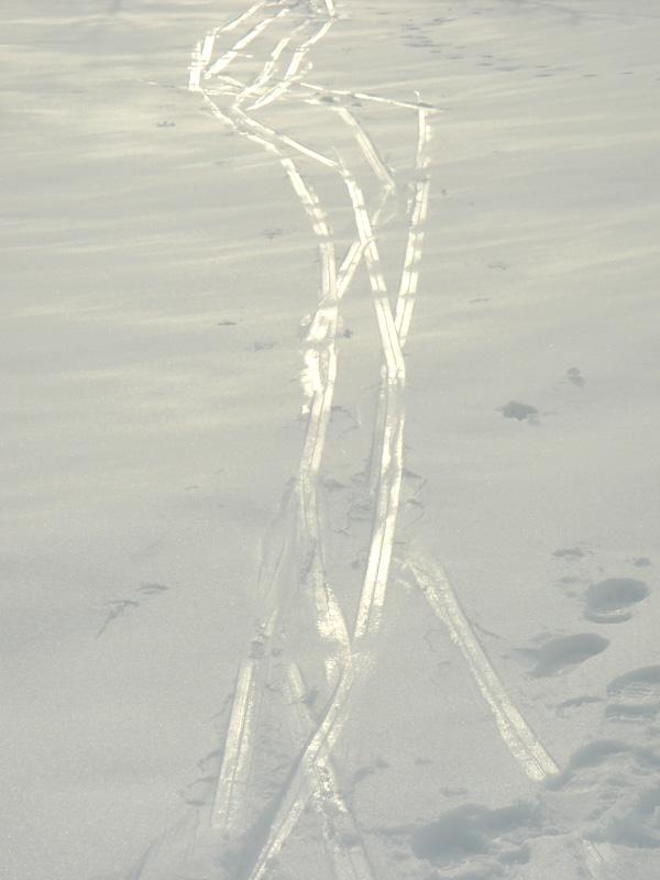 Shiny Ski Tracks