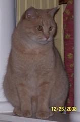 2008-12-31 (33)