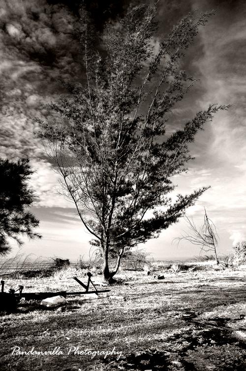 pokok b w 2