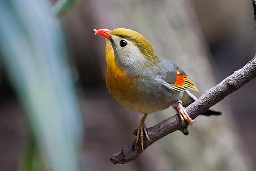 Module 3 Bird