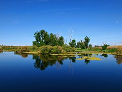 Azul (Jesus_l) Tags: espaa verde azul agua europa ciudadreal daimiel tablasdedaimiel jesusl