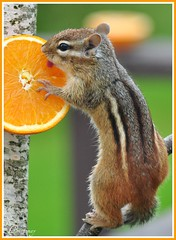 I'm some glad that those Orioles didn't come back to eat this orange :))) (Brittamay) Tags: w