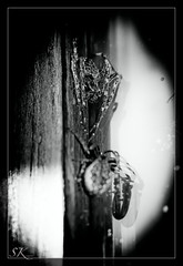 Mr. & Mrs. Spider (sk_snapshots) Tags: bw reflection animal animals dark spider nikon darkness mr spiders natur spiderman sw mrs spiegelung schwarz spinnen spiderwoman weis d90 tierwelt sksnapshots vision:text=0698 spinnenpaar