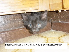 baseboardcat (likesdumbstuff) Tags: pictures cats silly cute animal animals cat hilarious kitten funny pics fark humor kittens pic captions caturday