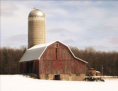 Tall Barn (siskokid) Tags: usa wisconsin barn rural cattle cows farm silo fabulous smrgsbord marathoncounty anawesomeshot aplusphoto diamondclassphotographer flickrdiamond flickrphotoaward theperfectphotographer qualitypixels llovemypics saariysqualitypictures