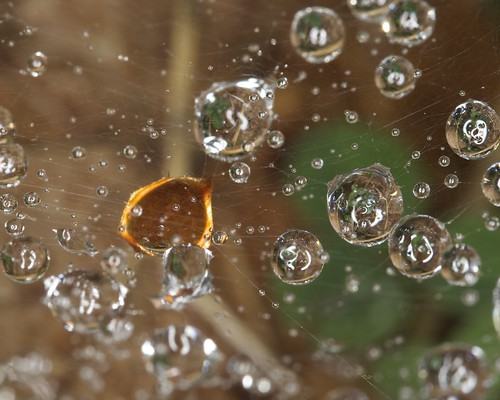 Water Drops in Spider Web (One Orange)