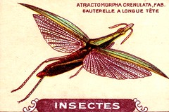 insecte 17