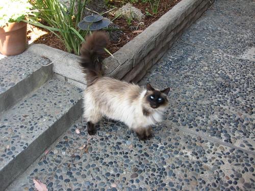 Bob Dylan's caretaker's cat