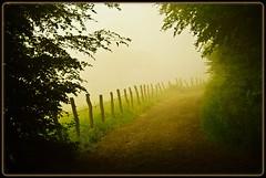 Zaun im Nebel - in the morning