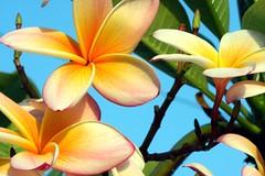 joy (xeno(x)) Tags: flowers color macro nature america canon garden 2008 excellence xeno bej 40d