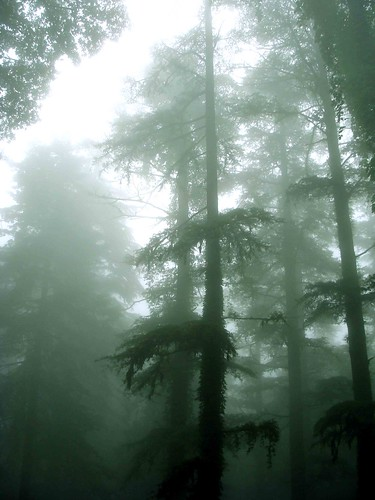 Nainital Behind the Mist
