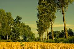 Colori d'estate in campagna (Colours of summer in the countryside) (fabry ... ) Tags: countryside italia campagna lombardia soe abigfave coloursofsummer diamondclassphotographer flickrdiamond coloridestate circolofotograficopaullese