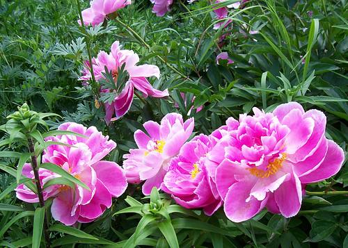 plenty of petals