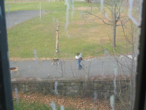 Dog walker walks away while reading