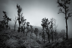 Kawah Ijen - East Java (Aur from Paris) Tags: trip travel bw storm tree toxic weather fog clouds trek dark indonesia volcano java blackwhite mood noiretblanc stones crater deviant toned montain volcan virage naturesfinest canoneos5d digitalblending kawahijen aur flickrsbest soufre