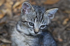 Tired kitty DSC_7972