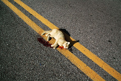 Roadkill Kitten