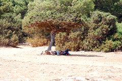 nuestra querida siesta (masagista_46) Tags: de playa sa coma