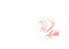 Roller-coaster Love (neelgolapi) Tags: longexposure pink white rose swirls explored canoneosdigitalrebelxti