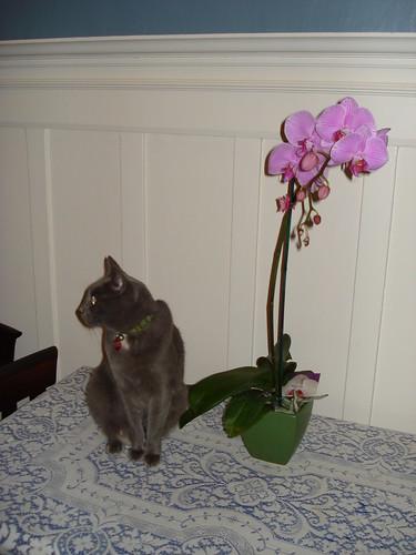 entropy & orchid