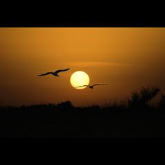 (Vincenzo D'Ortenzio) Tags: vincenzodortenzio thedortenzios steccatodicutro goldenheartaward animaazione dragondaggerphoto