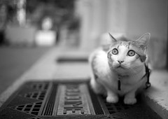 Welcome (Skyline-Photo) Tags: pet sol animal cat chat exterior dof bokeh entrance kitty tapis ground claw welcome rue athos entre pdc flin griffe exterieur