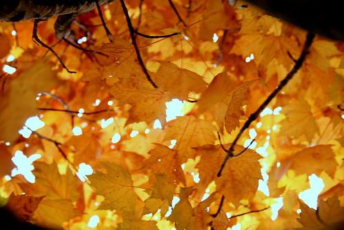 Autumn Crashes Down On Us 1