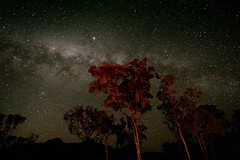 One thing I really like from Australia... (PacoAlcantara) Tags: sky night way stars angle wide australia explore nebula astrophotography newsouthwales astronomy milky  cosmos constellation canonefs1022mmf3545usm        apparentlyifoundaplaceinaustraliacalleddundee andeveryonegottoseeshootingstarsexceptmecrap   exploreoct2200891