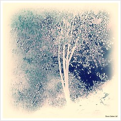 Poussire de neige...!!! (Denis Collette...!!!) Tags: trees wild fab snow canada reflection tree canon reflections river eos rebel photo bravo quebec photos rivire safari reflet arbres qubec rivers walden neige impressions dust collette arbre canoneos reflets photosafari impression impressionist denis eosrebel sauvages thoreau neiges poussires sauvage impressionists rivires portneuf wildrivers poussire wildriver impressionistes impressionniste dusts xti bej rebelxti artlibre canoneosrebelxti deniscollette pontrouge riviresauvage world100f multimegashot obq oraclex creattivit goldenmasterpiece riviressauvages photossafari novusvitanewlife