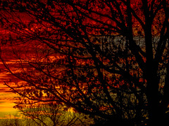 Twilight Fire (Jeff Clow) Tags: sunset tree silhouette twilight bravo explore dfw firstquality jeffrclow