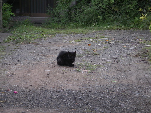 この黒猫はもしや……