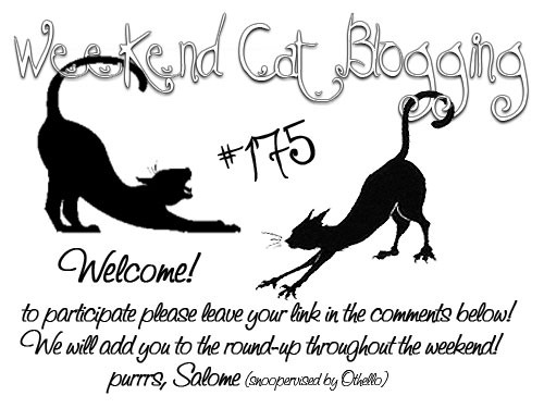 Weekend Cat Blogging 175